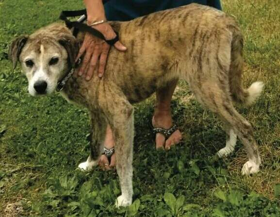 Autumn may be a big more bedraggled now after more than two weeks on her own in the wild, but she is still a distinctive-looking dog,